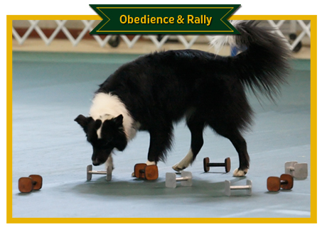 Obedience Photos